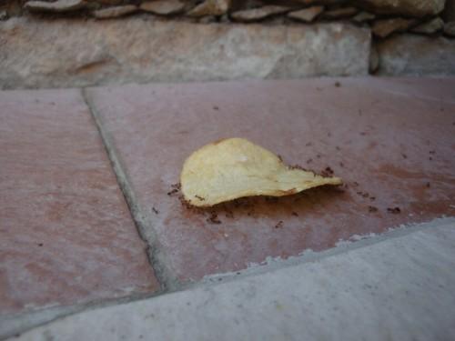 Mravci milujú chipsy